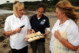 cottages4you - sharktrust - beachcombing