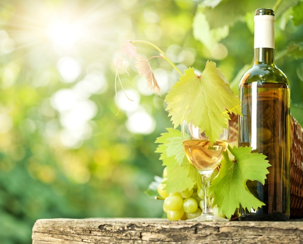 White wine bottle, vine, glass and bunch of grapes