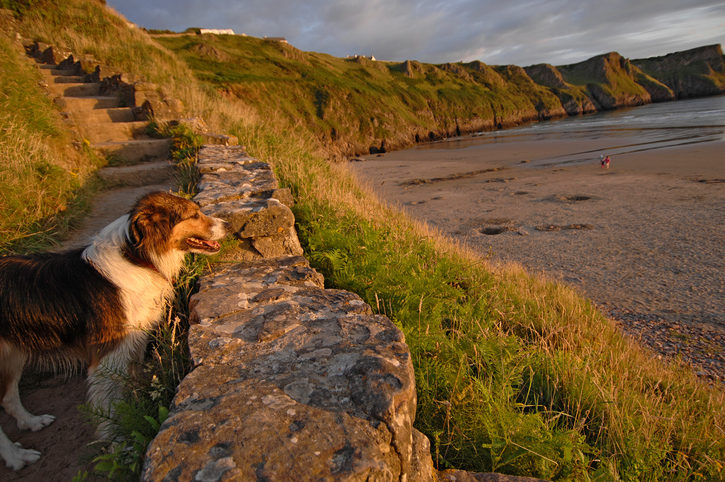 Gower pet friendly