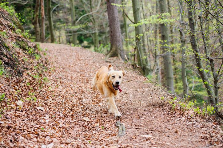 Hampshire dog friendly