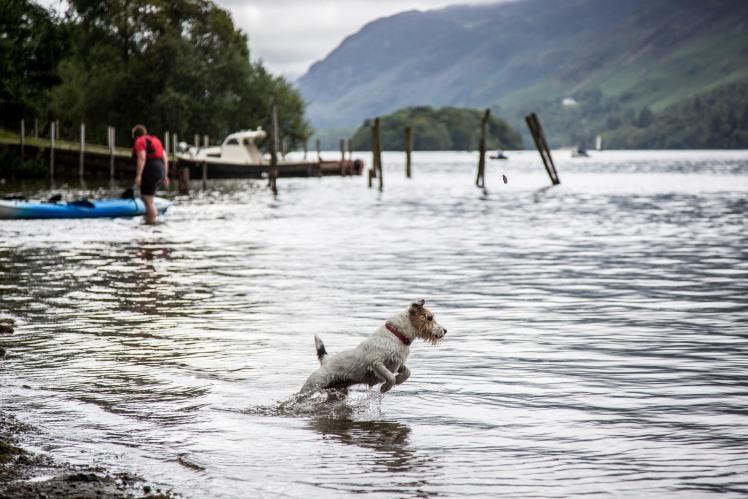 Dog friendly Lakes