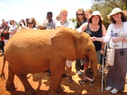 "Go wild and spot one of the ""Big 4"" Elephant / Giraffe / Zebra / Tiger."