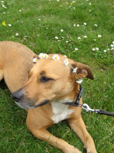 Spend a summer day making a daisy chain