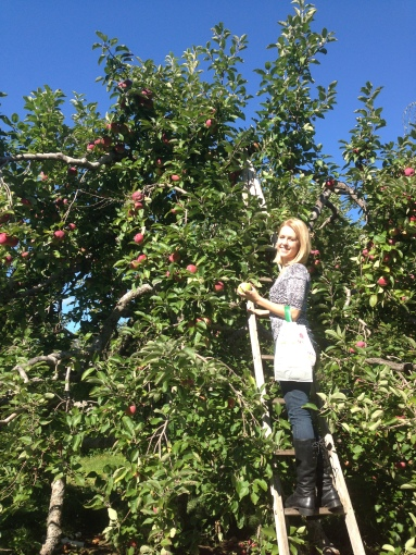 Calling all forragers! Find fruit trees and pick your own