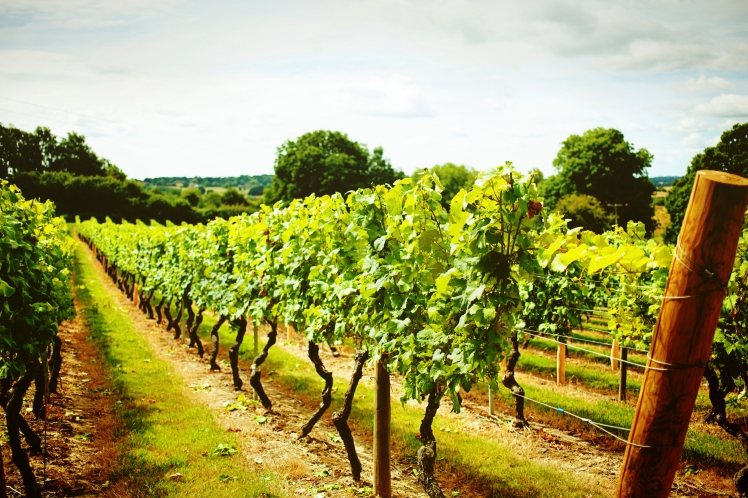 English vineyards
