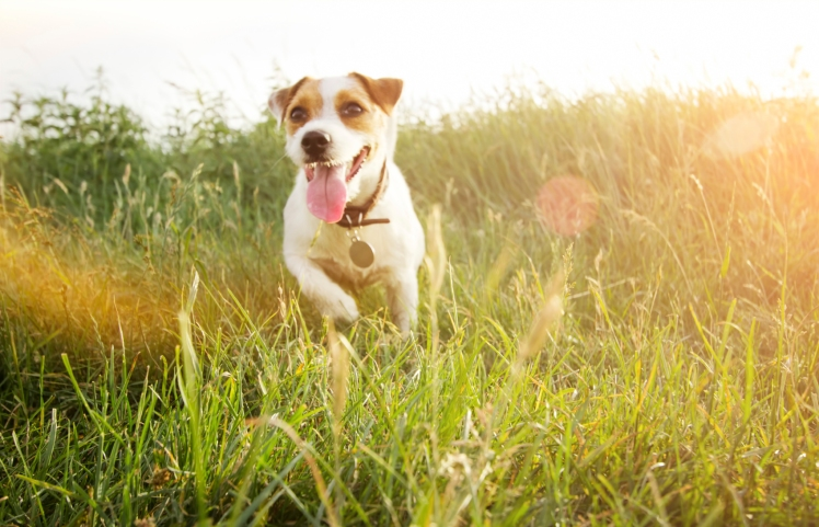 Dog in grass image