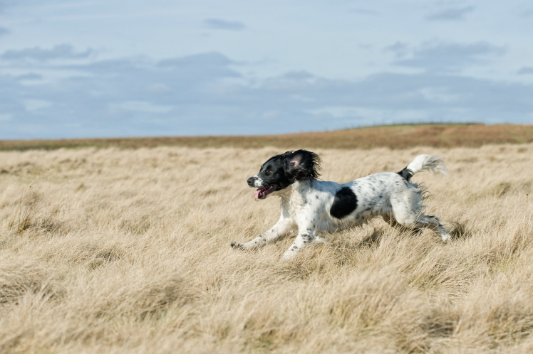 dog in yorkshire
